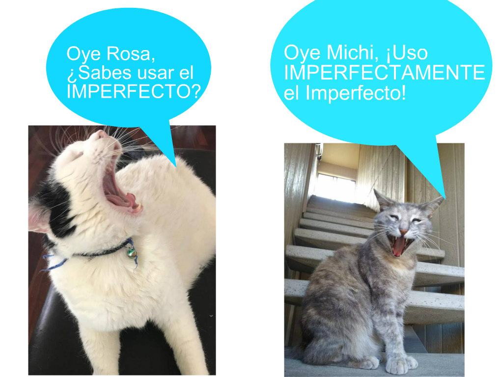 Learn the Imperfect and the Preterit in Spanish with Michi: Mi Perro-Gato!